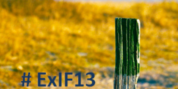 Discover the Island of Research (#ExIF13)
